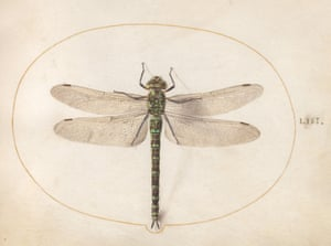Drawings of nature by Joris Hoefnagel from the book Insect Artifice published by Princeton University Press.