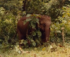 Elephant calf behind tree and foliage