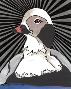 Long-tailed duck by presenter Chris Packham.