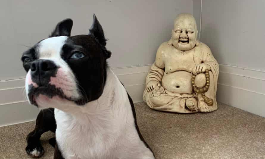 Alastair's dog – and his reclaimed buddha statue.