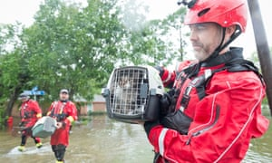 Responding to a resident report, the HSUS animal rescue team returns successfully with two cats trapped in a home.