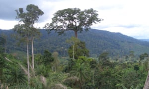 Forests are crucial to the control of global heating – yet too few commercial interests have committed to zero-deforestation.