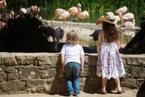 Children looking at flamingoes, Durrell Wildlife Conservation Trust, Jersey