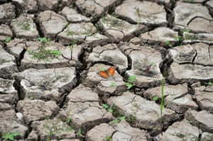 Tegucigalpa, Honduras View of a butterfly on dry earth at Los Laureles reservoir during Earth Day. Los Laureles, which supplies over 50% of the million inhabitant Honduran capital of water, is suffering a drought