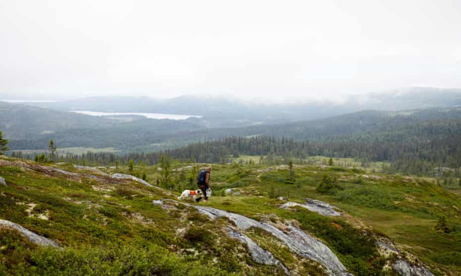 The remote landscape around Faviken is 350 miles north of Stockholm