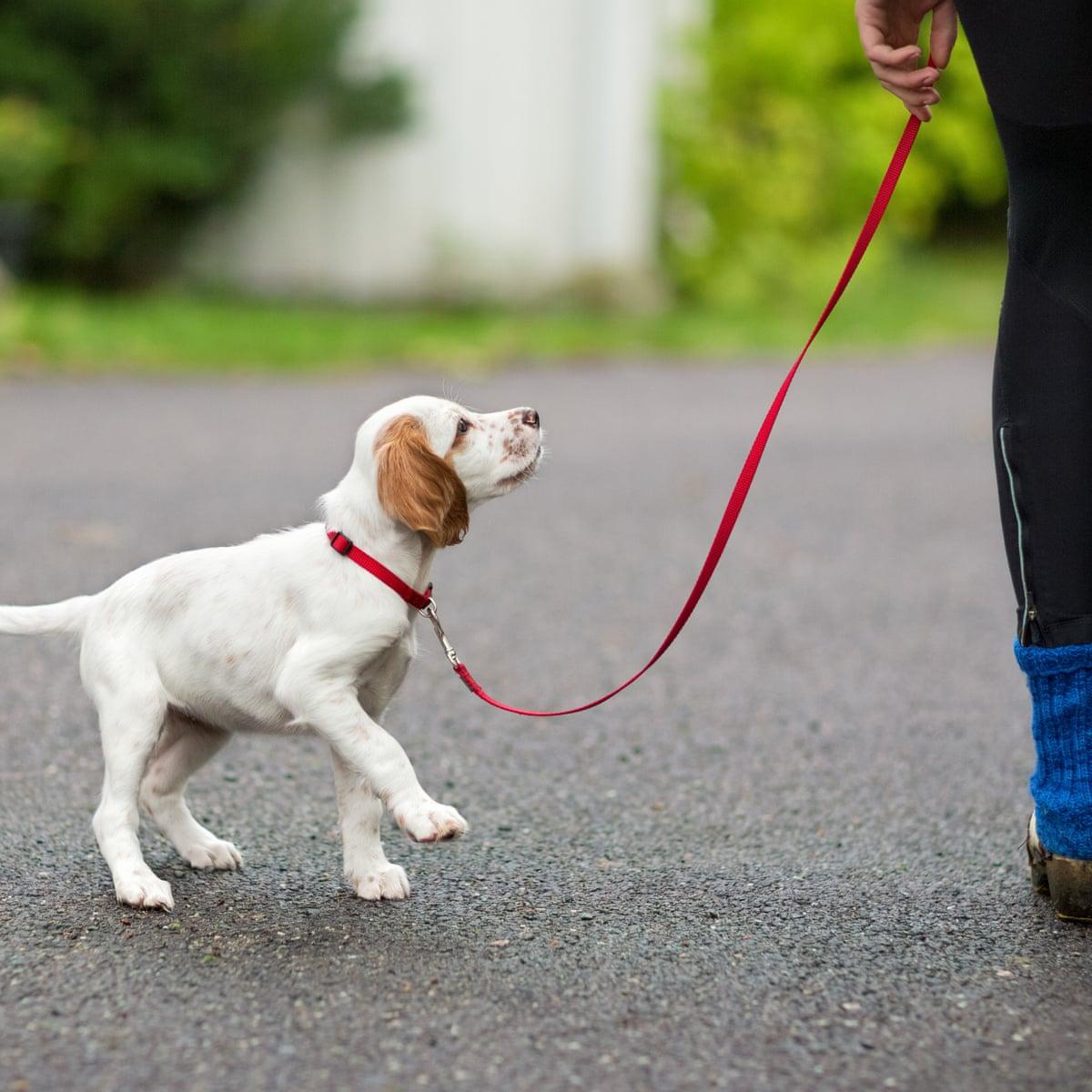 Dog walkers at Howard University infringe on 'black Mecca', students say |  Washington DC | The Guardian