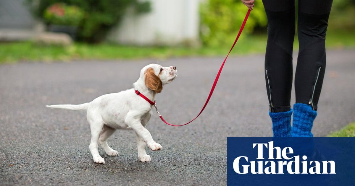 Dog walkers at Howard University infringe on 'black Mecca', students say