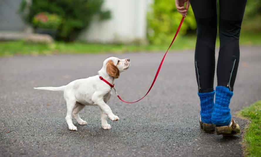 While it has recently gained attention, this isn't the first time Howard has suggested area residents not walk their dogs on campus.