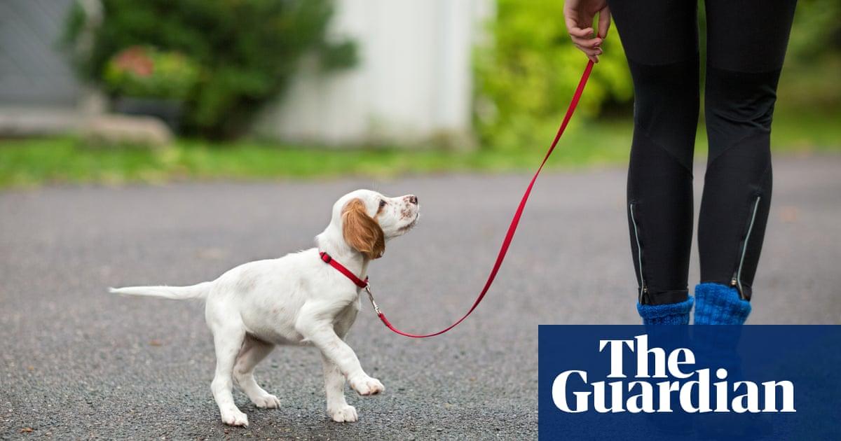 Mystery illness kills dozens of dogs in Norway | World news