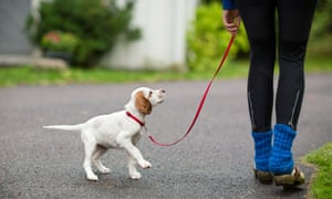 At least 25 dogs in Norway have fallen victim to the undiagnosed sickness, which causes severe vomiting and acute bloody diarrhoea.