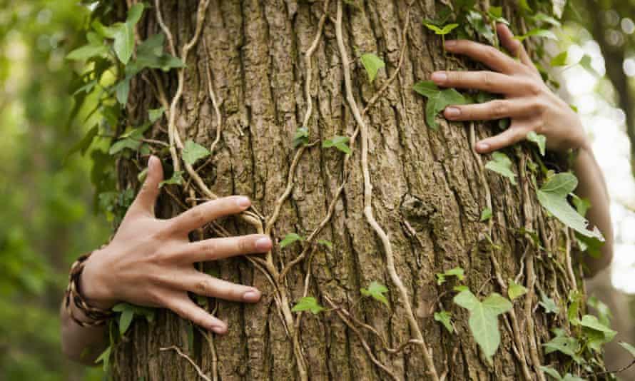 Go on, hug a tree.