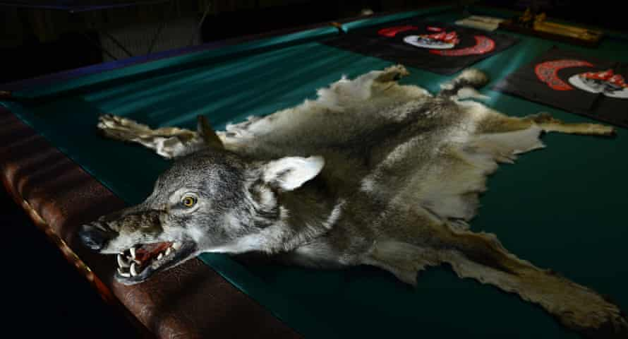 A wolf skin on a pool table at a clubhouse of the Night Wolves Russian biker gang