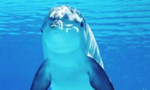 Dolphin swimming underwater.