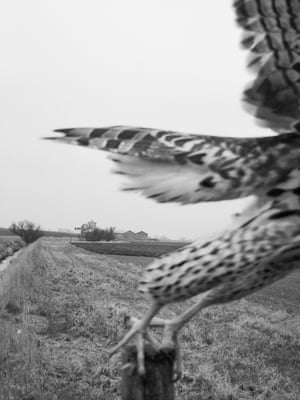 Photographs of birds of prey by photographer Stephen Gill from his book The Pillar published by Nobody books.
