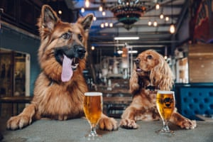 """UK A photo issued by BrewDog of dogs in their offices, as the craft brewing company announces they are to offer staff a week of paid """"paw-ternity leave"""" if they get a new dog"""