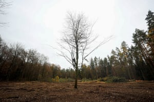 A protester sits in a lone tree in a demonstration against the extension of the A49 dual carriageway in a forest near Stadtallendorf, Germany.