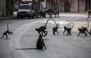 Monkeys cross an empty street during the Covid curfew in Ahmedabad, India, under the watchful eye of a group of police officers