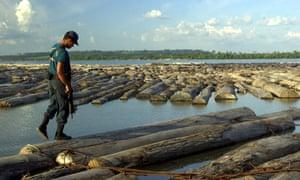 A seizure of illegal mahogany logs in Brazil.