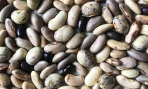 Bean feast: seeds saved from this year's crop to sow again for next summer.