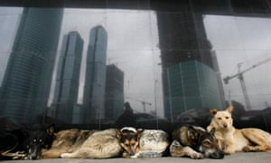 Dogs sleep outside a metro station in Moscow's financial district. In Moscow, despite concern from activists, killing of strays is rare.