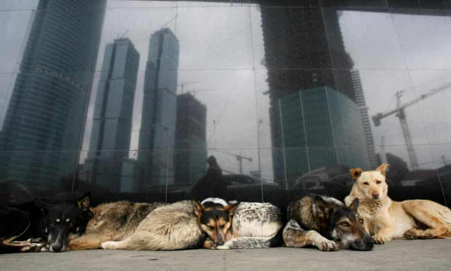 Stray dogs outside a metro station in Moscow