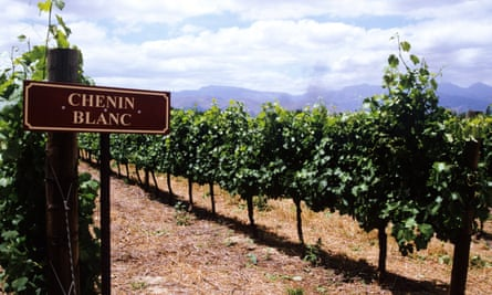 'Chenin is rich, voluptuous and lush.'