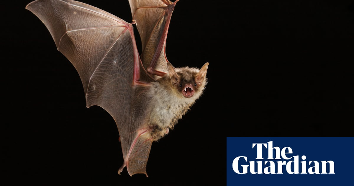 The last bat: the mystery of Britain's most solitary animal