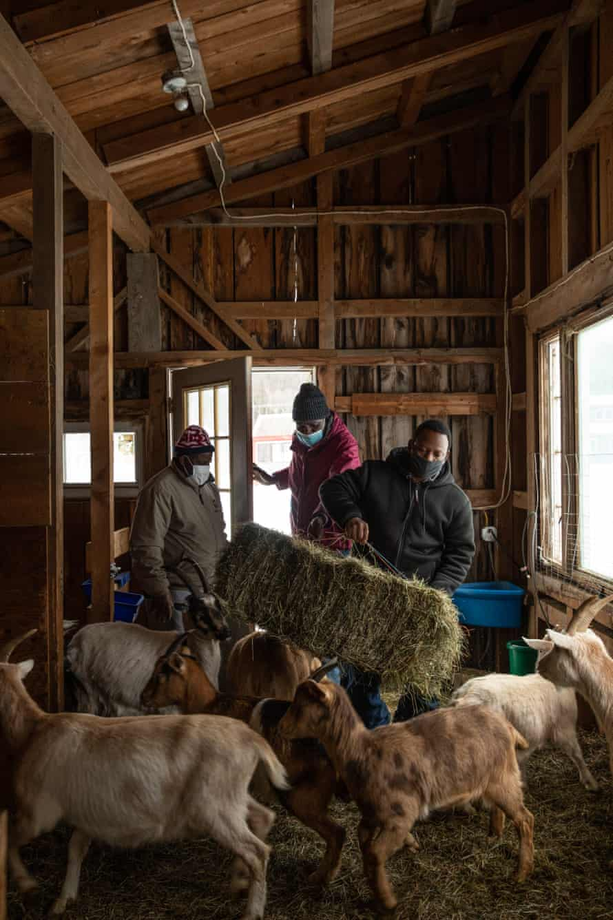 Mohammed Mohammed, left, Hassan Barjin, and Muhidin Libah, right, feed and check on the goats on their new Little Jubba property.