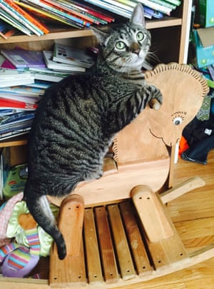"Annie McMillan caught her cat going for a ride in ""Cowboy Banjo"" in Sioux Falls, United States"