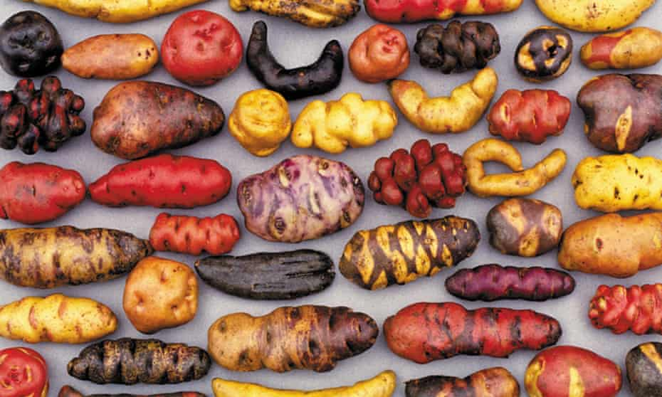 Some of the thousands of native potato varieties that grow in Peru.