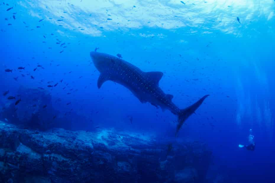 'The Galápagos Marine Reserve is a place of very great productivity, high biomass but also biodiversity.'