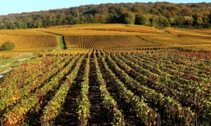 Champagne vineyards in Mailly-Champagne near Reims, eastern France.