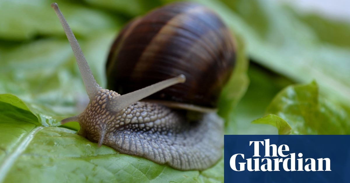 Get off my lettuce! Three quick ways to deter snails without poison