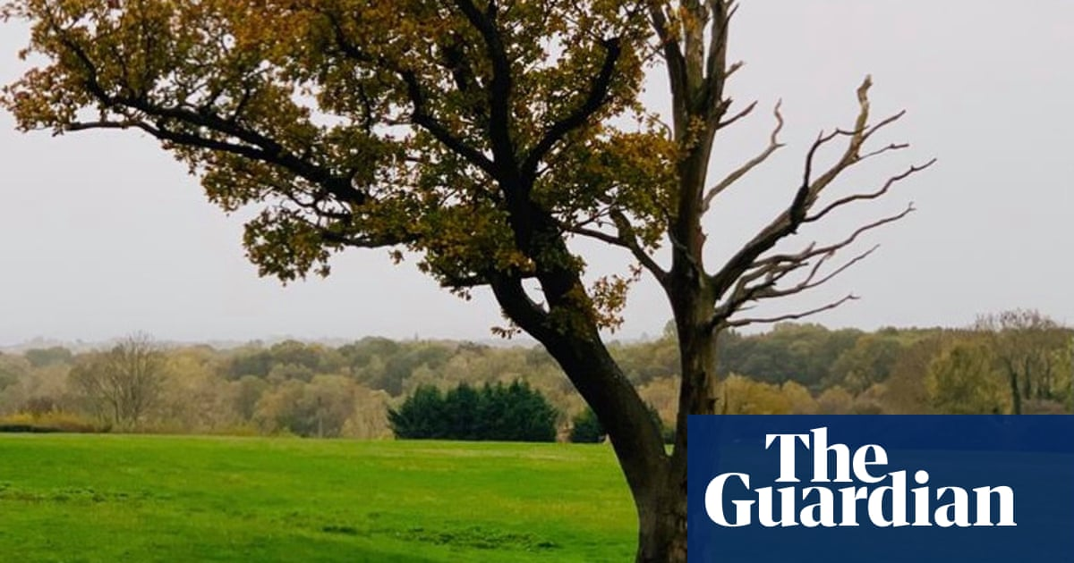 Young country diary: this dying tree is still full of life