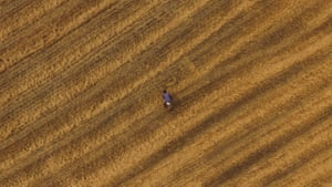 Chengdu, China: A worker collects wheat in a field