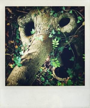Tree in Blean Woods