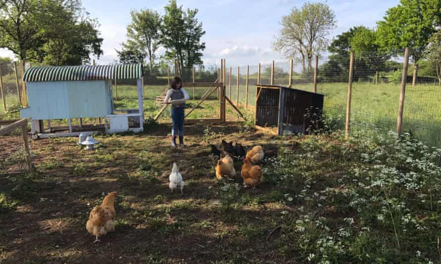 India Knight's daughter Nell feeding their chickens