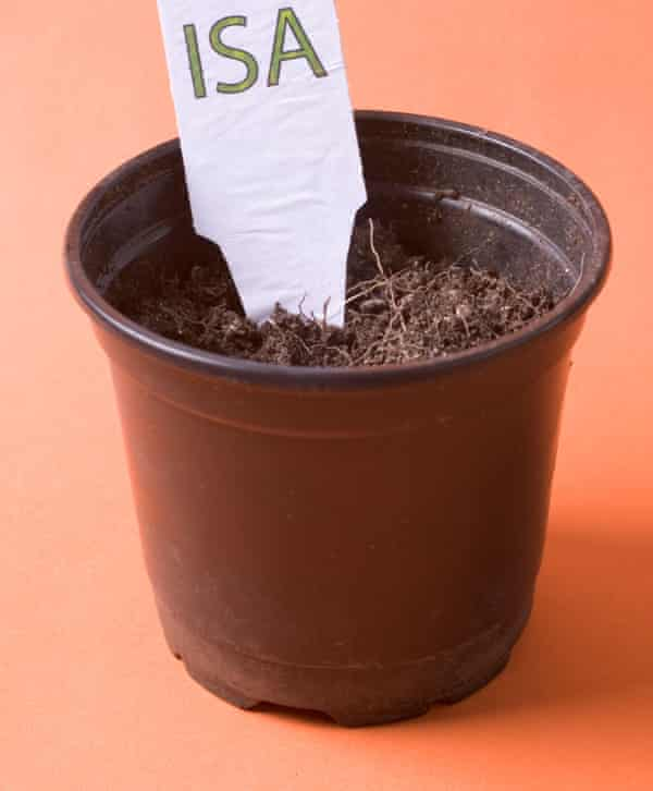 Isa label in plant pot with small shoots leaves