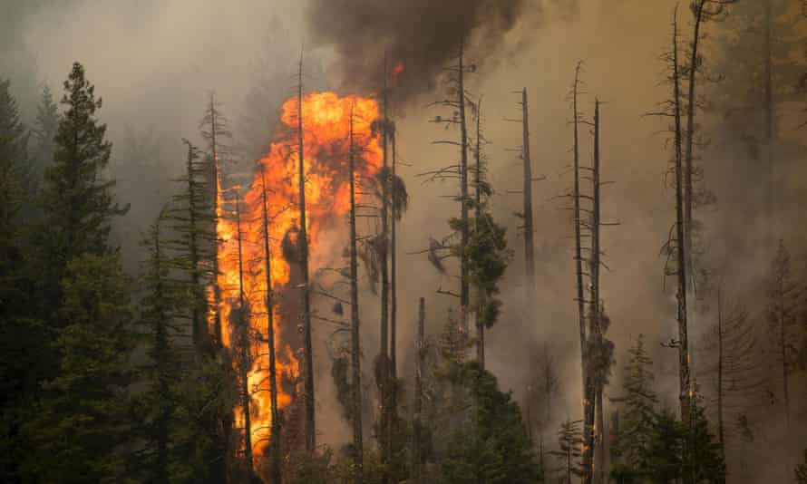 Treetops burn during the Wolverine Fire near Holden, Washington, in this US Forest Service photo taken 15 August 2015.