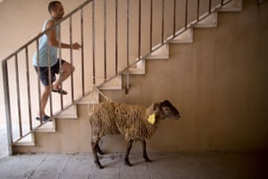 Lamb tied to staircase