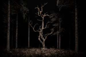 Danse Macabre, 2020Many of us feel that we have lost our ability to be carefree. This emotion seems to resonate within Goodall's photographs of dark, arboreal landscapes, with their haunting silences