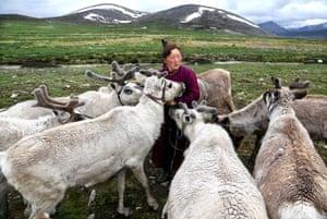Tsaatan woman in red with reindeer