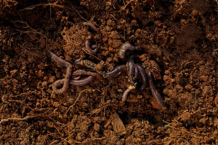 A square metre of earth is home to thousands of worms