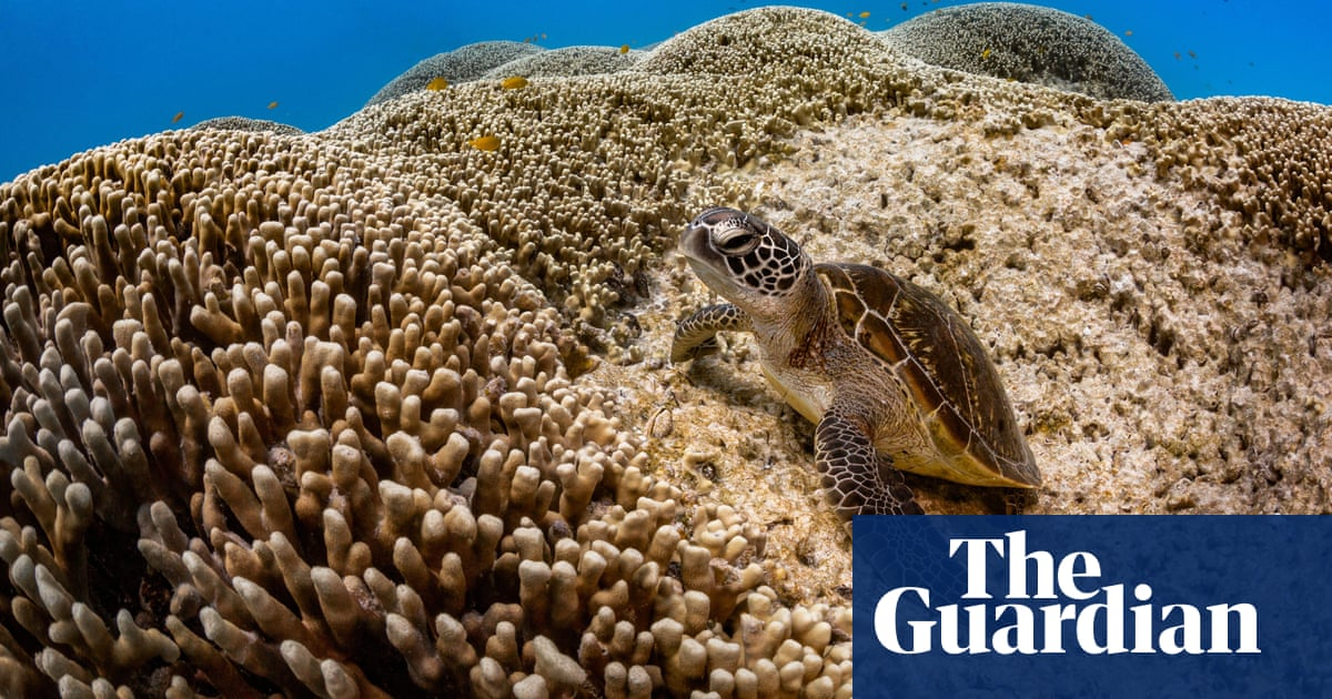 Could dumping save the reef? CSIRO finds it's possible to turn back clock on effects of fossil fuel burning