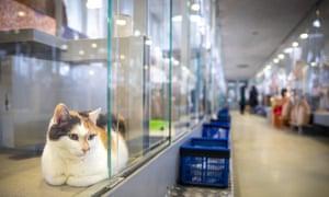 A cat in the sanctuary