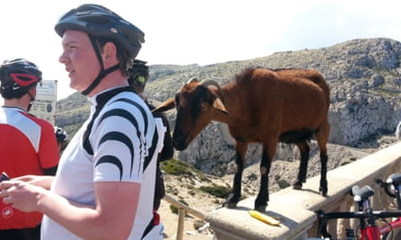 An agile goat at Cap Formentor, Mallorca, eyes up the food of a cyclist.