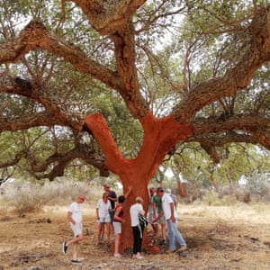 Visitors stand by an oak on a Corktrekking tour in Alentejo, Portugal.