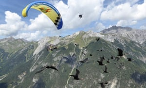Northern Bald Ibis fly with their human foster parent who is teaching them how to migrate