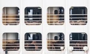 Livestock on board a cargo ship.