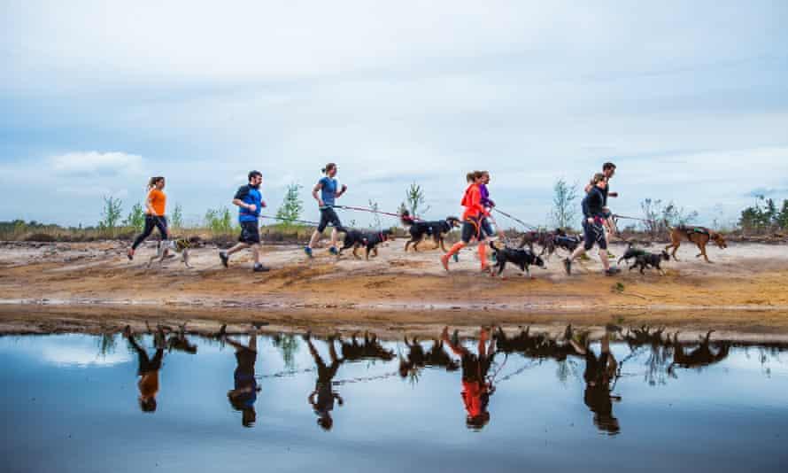DogFit members enjoying a social canicross run in the Surrey Hills